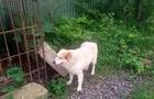 В Іршаві собака біля лікарні вірно чекає свого господаря, який вже помер