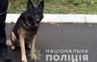 В Ужгороді собака знайшов 85-річного дідуся, який загубився