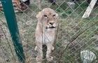 У Синевирі з`явилася дика левиця (Фото)