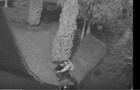 У Виноградові камери відеоспостереження зафіксували як вандал нищить смітник (ВІДЕО)