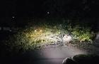 В Ужгороді дерево спало на дорогу і перекрило рух (ФОТО)