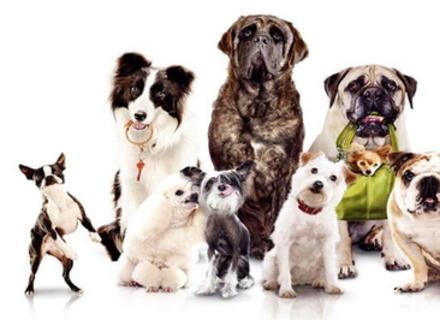 Вчені довели, що собаки вміють обманювати