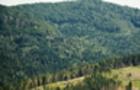 Геннадій Москаль: «Ужгородське військове лісництво» перетворилося на сімейно-бізнесову структуру»