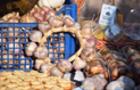 На Перечинщині з'явився новий торговий бренд - Турянський часник