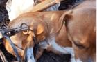 В Ужгороді собака потрапила в капкан браконьєрів