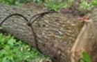 На Рахівщині лісівники допустили незаконну рубку 700 дерев