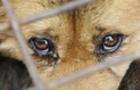 Як зупинити знущання над тваринами в Закарпатті