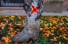 Влада Ужгорода знищує зелений фонд міста. Від початку року зрубано 217 дерев