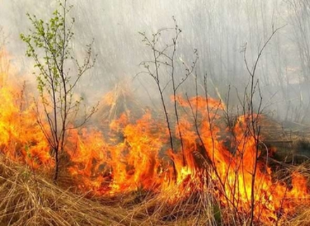 На околиці Ужгорода пожежники випадково виявили тіло чоловіка