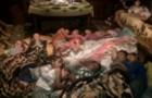 Пожежа в циганському таборі на Закарпатті сталася в результаті кланових розбірок (ВІДЕО)