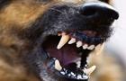 На Закарпатті в горах собаки покусали туристів