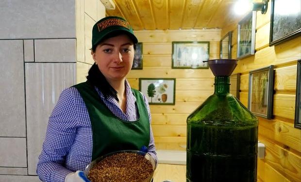У Закарпатті заготовляють насіння шишок, яке лікує рак