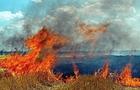 Ужгородські лісівники закликають людей не спалювати сухостій