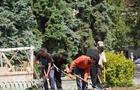 В Ужгороді із 800 нововисаджених квітів знищено вже 300