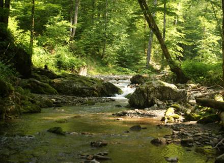 Закарпаття стане зеленішим: Уряд обмежив санітарні рубки дерев та розширив Карпатський заповідник