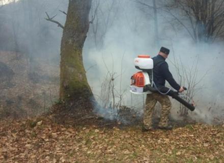 Лісівники: ситуація з пожежами в Рахівському районі близька до надзвичайної