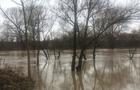 Річка Уж вийшла з берегів: Підтоплено дворогосподарства, дерево впало на автомобіль (ВІДЕО)
