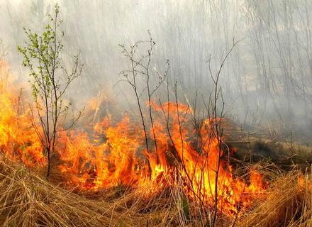 Антикризове об'єднання Закарпаття закликало громади зупинити підпали сухостоїв в області