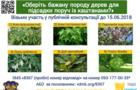 Ужгородці хочуть, щоб до каштанів на Київській набережній підсадили дерева гінкго білоби