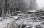 На Закарпатті рятувальники буксирували застряглі автомобілі та розрізали дерева, які впали на дорогу