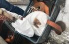 Закарпатські прикордонники знайшли в угорця понад 6 кг бурштину
