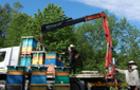 Солодкі мрії про експорт закарпатського меду: чому європейці не знають, як він смакує