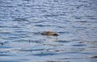У Річці біля Хуста виявили тіло чоловіка